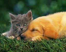 Лечение собак и кошек за рубежом