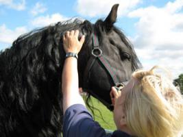 Лекарственные препараты для лошадей — недоступное доступно